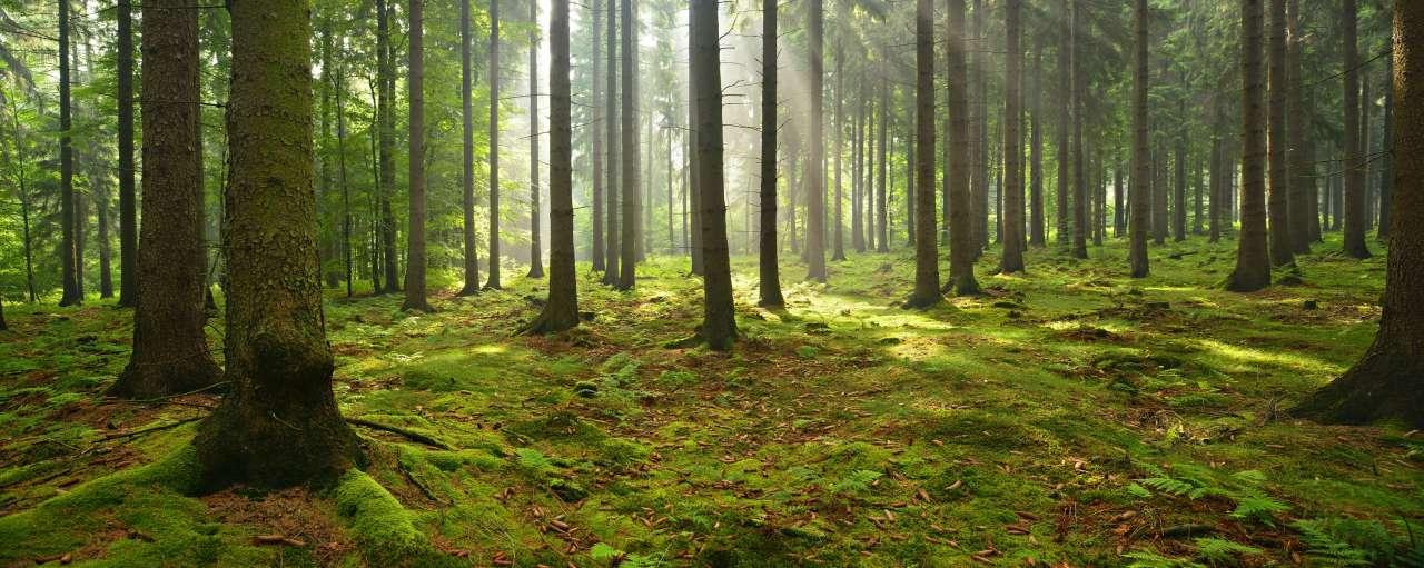 bos, bosbeheer, duurzaamheid, duurzaam bosbeheer