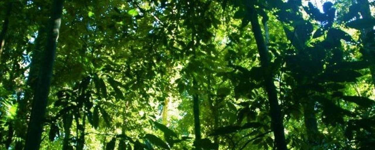 Ontbossing vraagt vertaling belofte naar actie