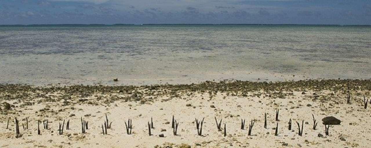 Nederland stort 100 miljoen in klimaatfonds VN