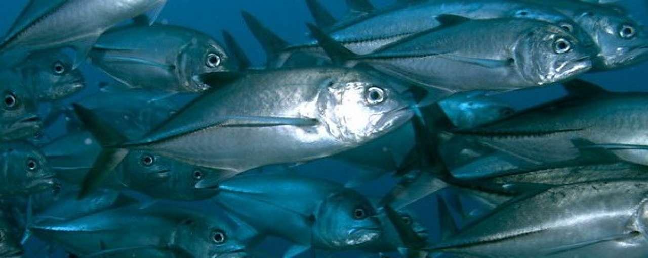 Google Earth stimuleert duurzame visserij