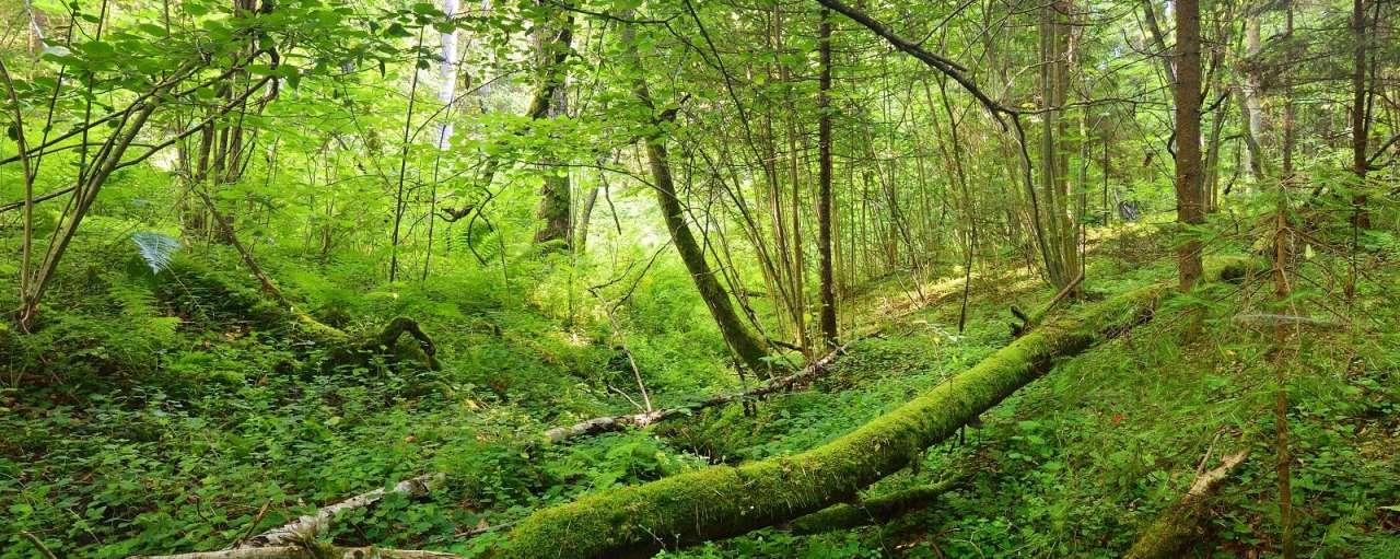 duurzaam bosbeheer epe