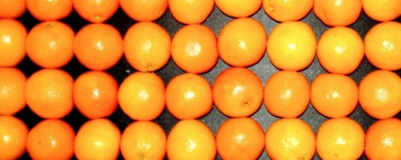 Biobrandstof uit rotte sinaasappelen