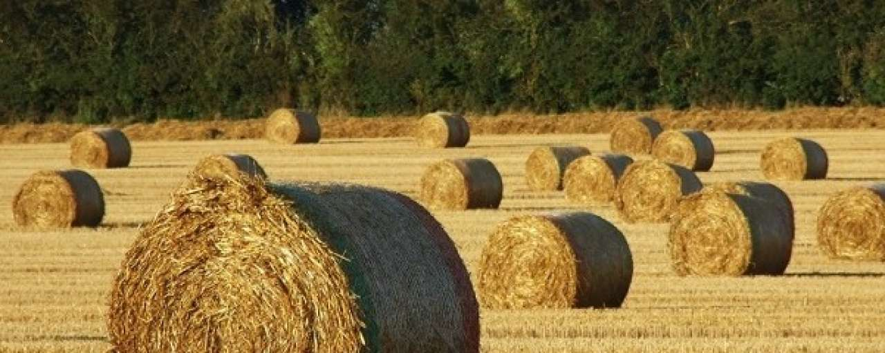 ECN succesvol met vergassing biomassa