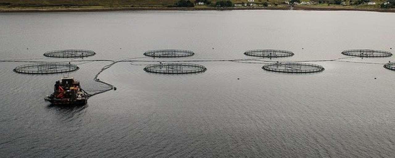 Nieuw economisch model voor duurzame visserij