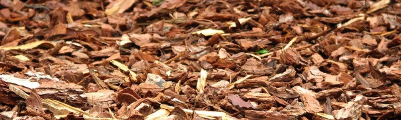 Energieleveranciers pleiten voor strenge wet biomassa