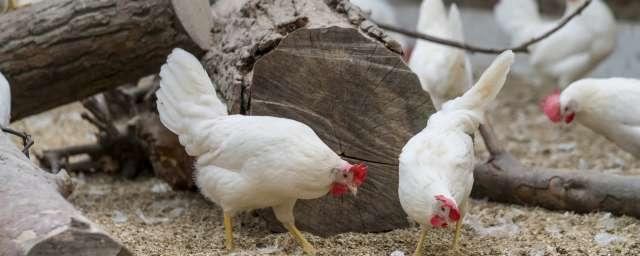 kipster duurzaam