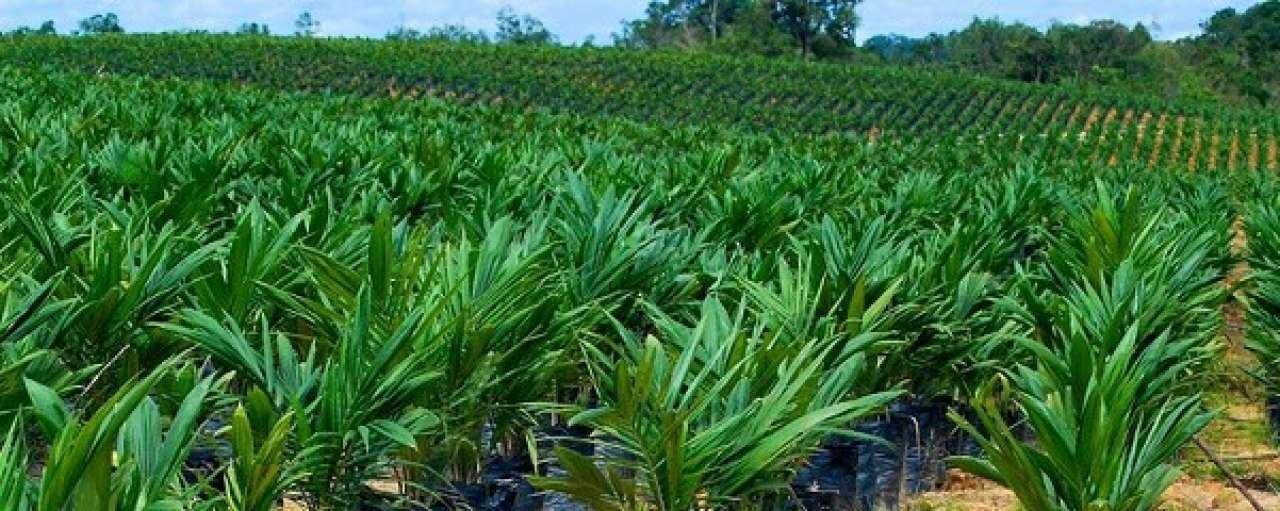 Duurzame palmolie mijlpaal voor Sainsbury's