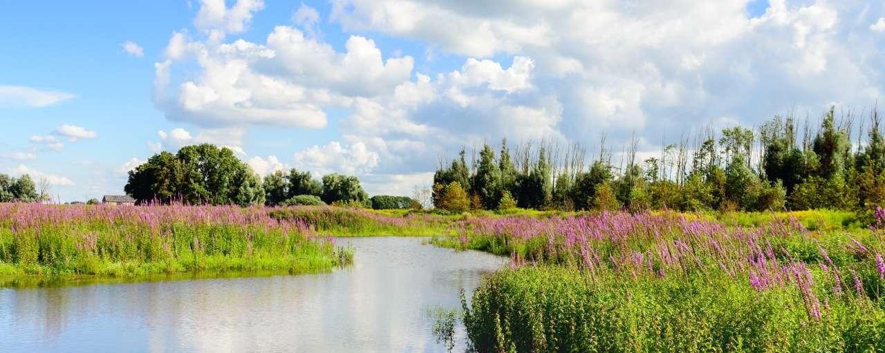Natuur, biodiversiteit, water, planten