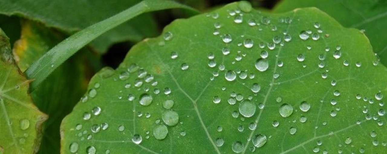 6x duurzaam innoveren met de natuur als voorbeeld