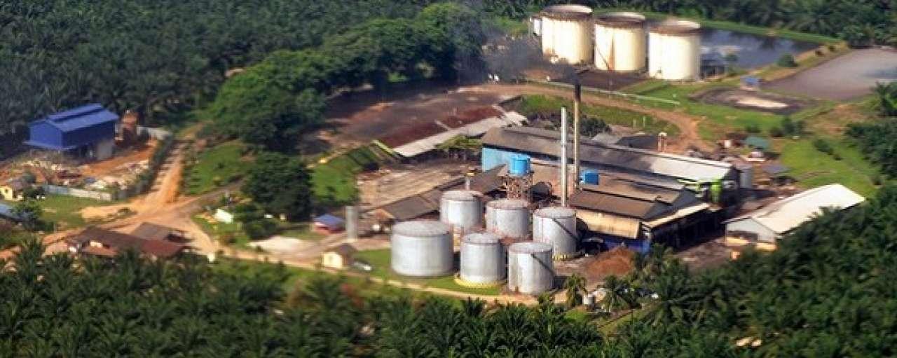 3 Bedrijven die zich effectief inzetten tegen ontbossing