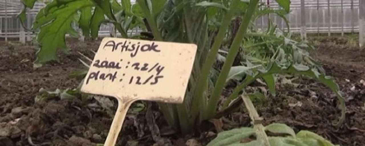 Flevoland investeert in landbouw van de toekomst