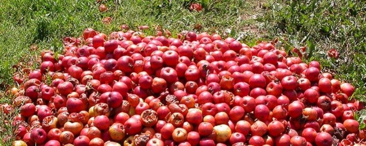 Voedselverspilling, appels