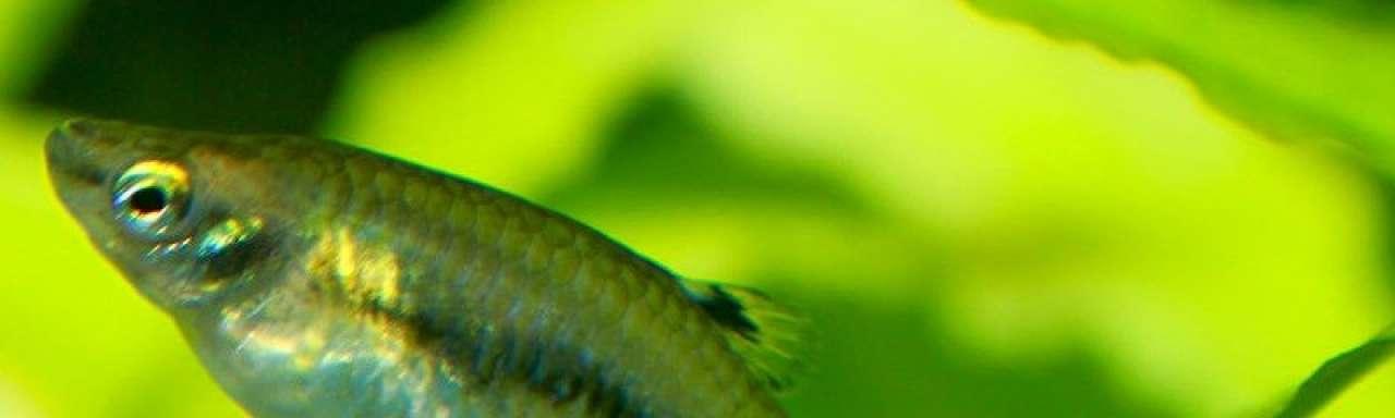 Duurzame vis