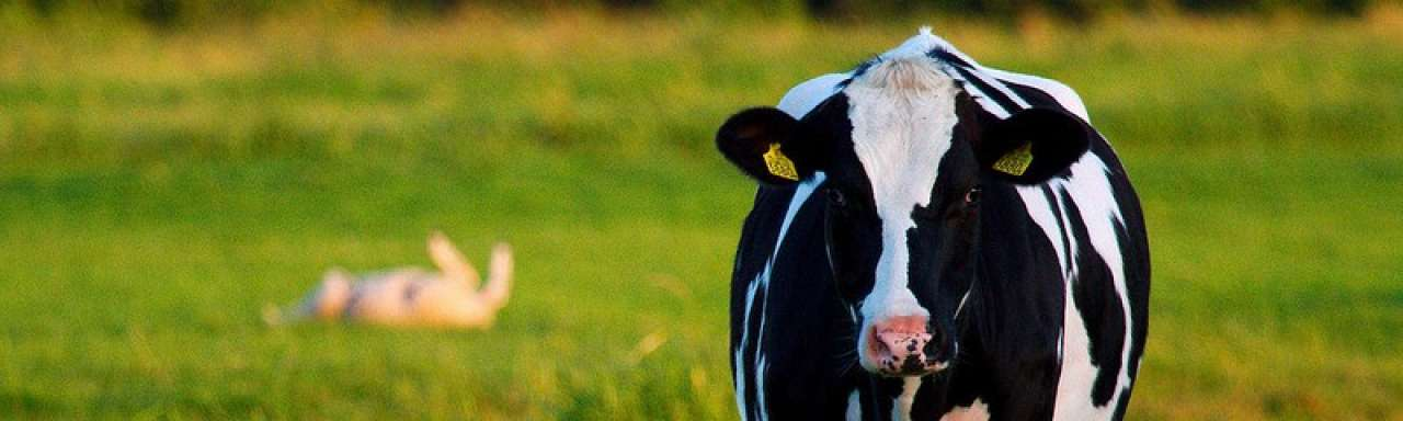 Intensieve landbouw groen maar controversieel