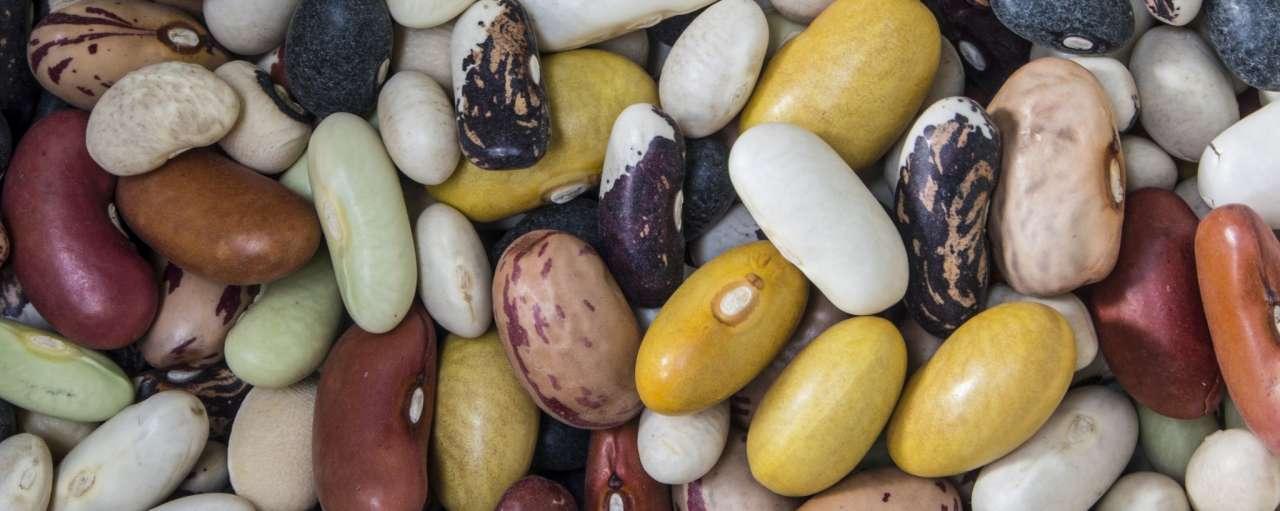 landbouw, bonen