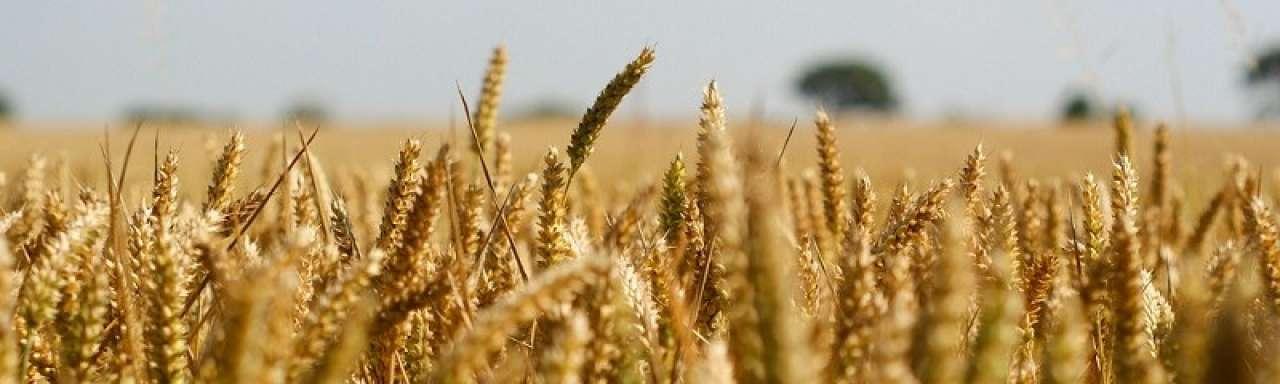Onzekere toekomst voor biobrandstoffen in EU