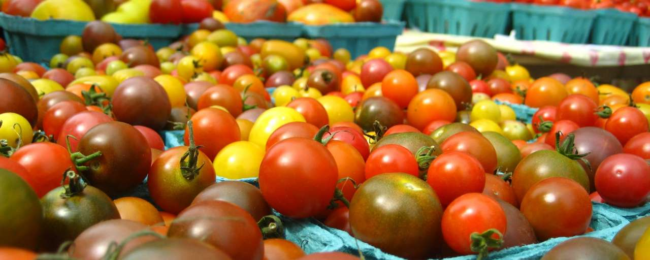 Tomaten Van der Hoeven kas Australië