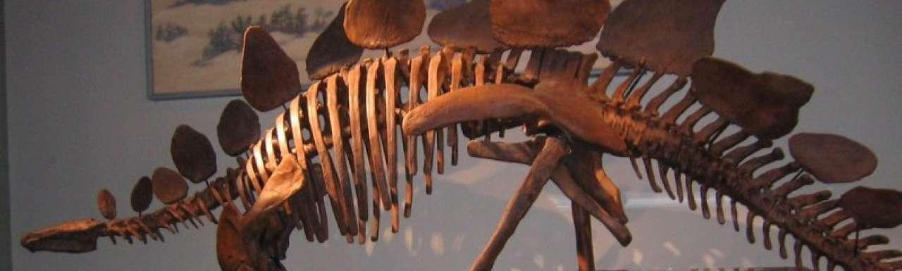 Dinosaurus inspiratie voor efficiëntere windmolens