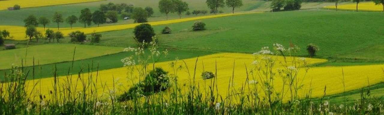 Biobrandstoffen: omstreden, maar geen alternatief
