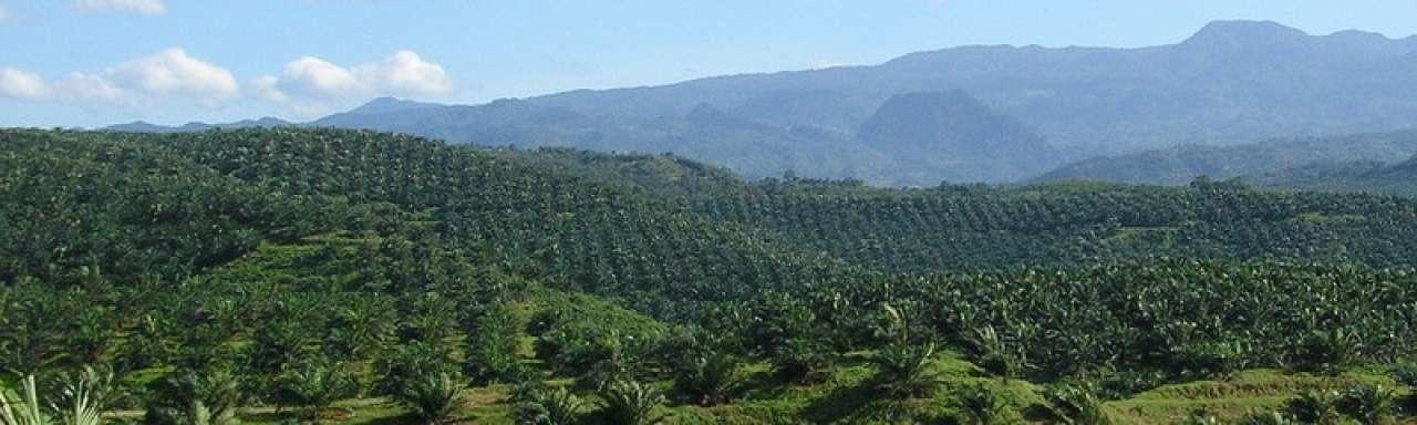 Gebruik palmolie voor biobrandstof een ramp
