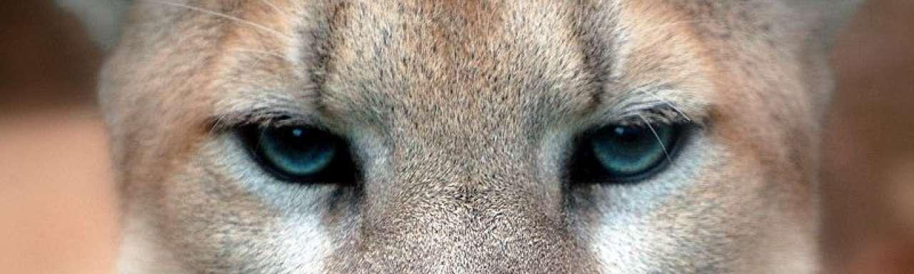 Puma werkt aan winst-en-verliesrekening voor milieu