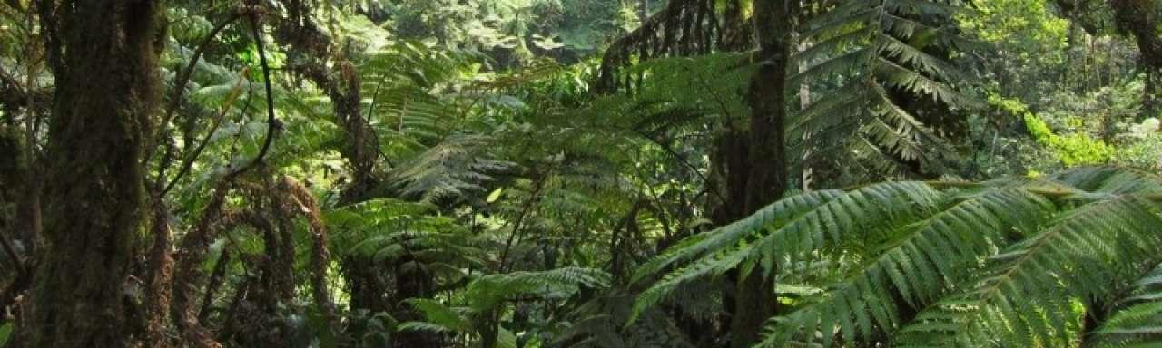 CO2-rechten onderdeel van businessmodel tegen ontbossing
