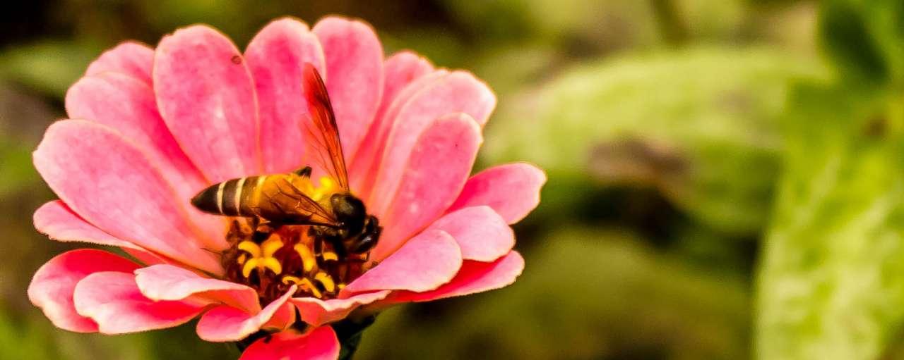Bijensterfte