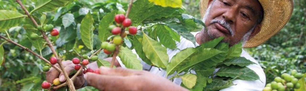 McDonald's investeert €5 miljoen in duurzame koffie